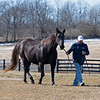 Ocean Drive, in foal to English Channel<br /> Scenes at Blue Heaven Farm near Versailles, Ky. on Feb. 23, 2021.