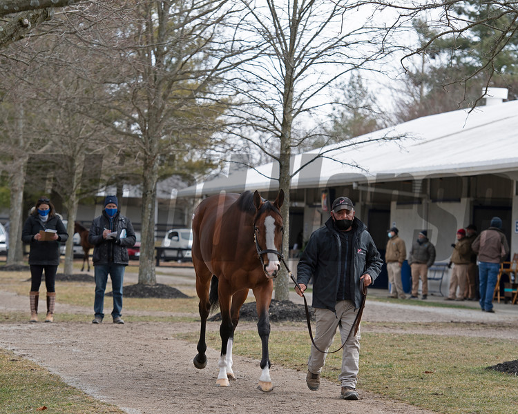 Scene with Hip 675 Saguaro Row from Blake-Albina Thoroughbred Services at Fasig-Tipton Winter Mixed Sale in Lexington, Ky. on Feb. 6, 2021.