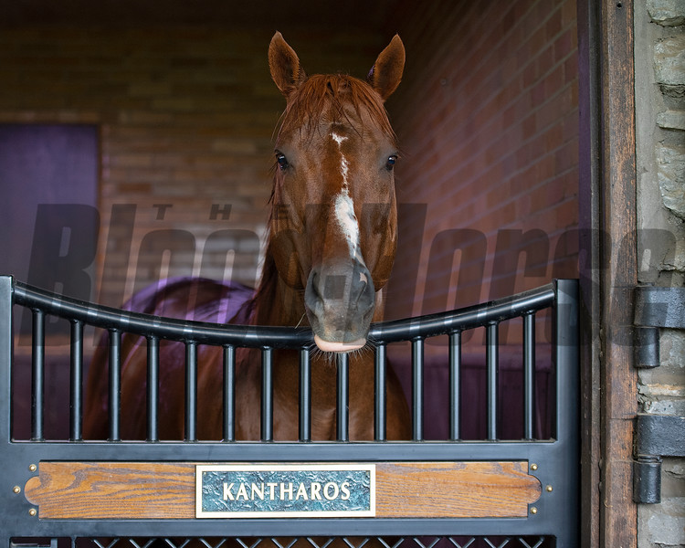 Kantharos in his stall<br /> Scenes at Hill 'n' Dale (Xalapa) near Paris, Ky., on April 14, 2021.