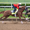 Dynamic One starts his work behind his workmate<br /> Kentucky Derby and Oaks horses, people and scenes at Churchill Downs in Louisville, Ky., on April 23, 2021.
