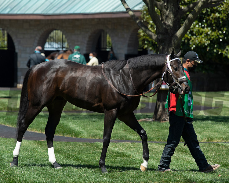 Scenes: #5 Shadow Matter in the saddling area before winning Race 3. <br /> at Keeneland near Lexington, Ky., on April 3, 2021.