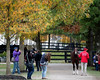 Fasig-Tipton November Sale