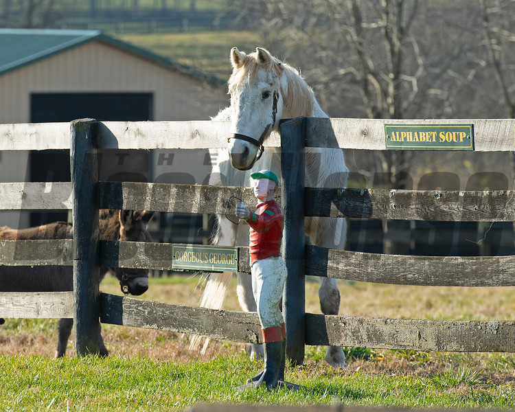(R-L); Alphabet Soup and Gorgeous George<br /> Old Friends near Georgetown, Ky., on Dec. 11, 2020.
