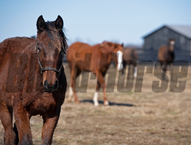 Yearlings in a field. <br /> Scenes at Blue Heaven Farm near Versailles, Ky. on Feb. 23, 2021.