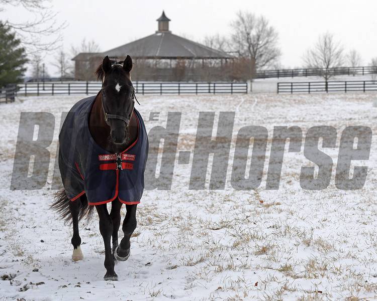 More Than Ready at WinStar Farm in Versailles, Ky. on Jan. 13, 2018.