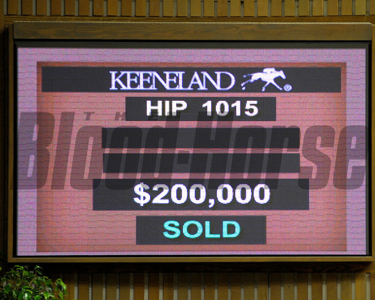 Caption: Hip 1015, final A.P. Indy yearling to sell during the Keeneland Sales. Filly from Hill 'n' Dale<br /> Keeneland September yearling sales at Keeneland in Lexington, Ky.<br /> Today: September 12, 2012<br /> KeeSeptSales Hip1015AP  image 865<br /> Photo by Anne M. Eberhardt