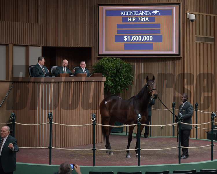 Hip 781A Mrs McDougal brings $1.6M from Steve Young