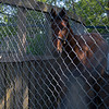 Justify yearling out of Screaming Skylar on the walker at Rose Hill Farm in Lexington, Ky.,. on June 28, 2021.