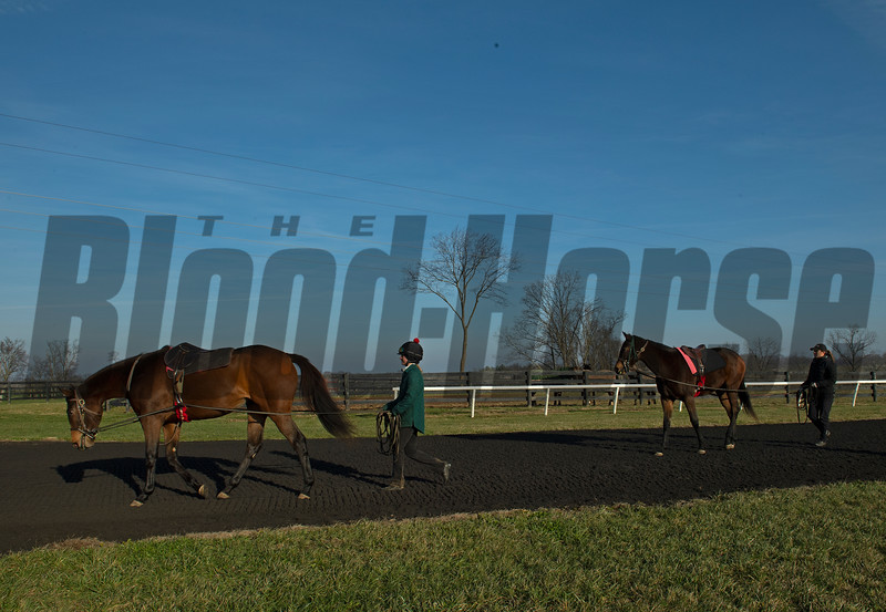 Yearlings under tack during the training process at Jim and Susan Hill's Margaux Farm near Midway, Ky., on Dec. 8, 2020.