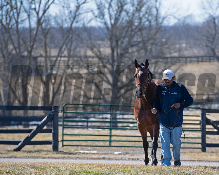 Starship Jubilee coming in from her field.<br /> Scenes at Blue Heaven Farm near Versailles, Ky. on Feb. 23, 2021.
