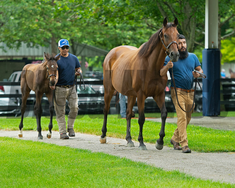 Hip 437 Electro Peg and her 2021 Far From Over filly at the Stuart Morris consignment.<br /> Scenes, people and horses at The July Sale at Fasig-Tipton near Lexington, Ky. on July 10, 2021.