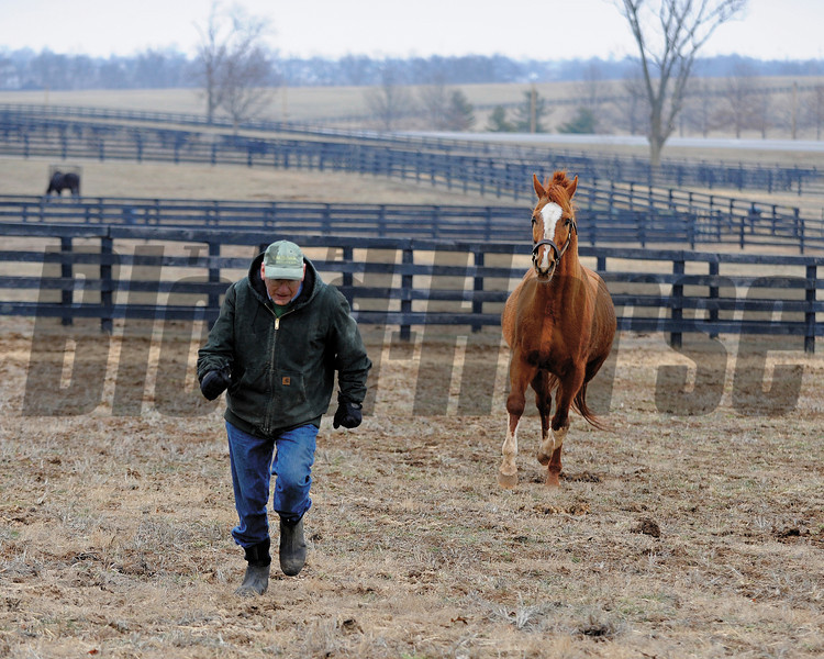 Caption: Having fun, Blowen goes into the paddock and (with a head start) runs with Marquetry. <br /> Michael Blowen and the horses at Old Friends retirement home near Georgetown, Ky. on Jan. 31, 2011.<br /> Origs1 image451<br /> Photo by Anne M. Eberhardt