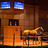 Hip 434 Colonial Creed from South Point Sales<br /> Scenes, people and horses at The July Sale at Fasig-Tipton near Lexington, Ky. on July 12, 2021.