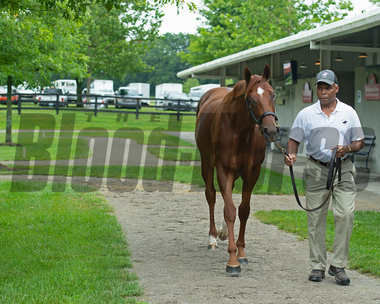 Hip 275 filly by Street Boss out of Seeking the Light at Winchester Equine (William Snowden), agent.<br /> Scenes, people and horses at The July Sale at Fasig-Tipton near Lexington, Ky. on July 11, 2021.