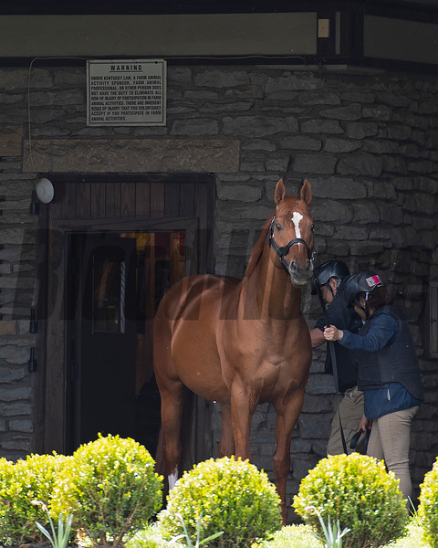 Curlin before going to the breeding shed. <br /> Scenes at Hill 'n' Dale (Xalapa) near Paris, Ky., on April 14, 2021.
