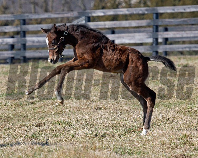 frolicking foal.<br /> Flawless with her 2021 colt, a full brother to Authentic, born on Feb. 7 at Hurricane Place farm near Cynthiana, Ky., on March 3, 2021.