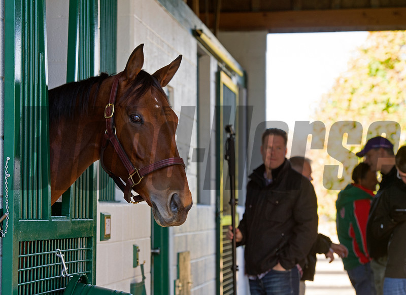 Beholder arrives at Spendthrift Farm in Lexington, Ky., on Nov. 21, 2016, in Lexington, Ky.
