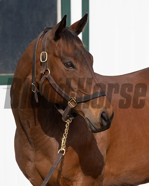 Drumette owned by Bridlewood is in Kentucky to be bred to Tapit and resides at a division of Gunston Hall on March 9, 2021.