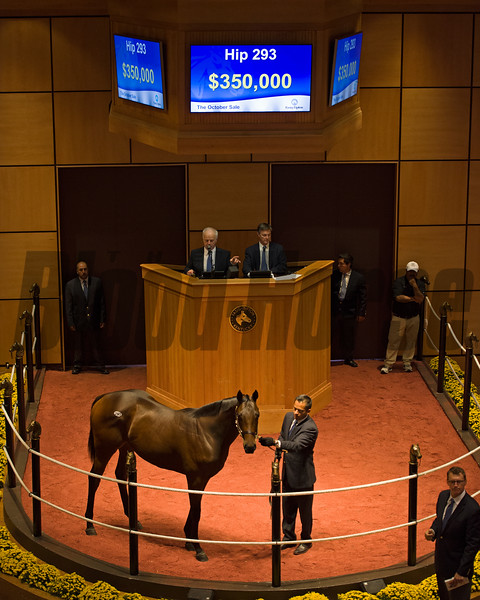 Hip 293 colt by Curlin--Party Chatter brings $350,000 at Fasig-Tipton Kentucky October sales at Fasig-Tipton in Lexington, Ky., on Oct. 24, 2016.