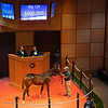Hip 129 colt by City of Light out of Breaking Beauty from Hunter Valley<br /> Sales horses at The November Sale at Fasig-Tipton Kentucky in Lexington, Ky. on November 8, 2020.