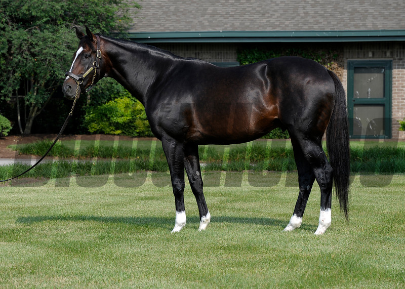 Tiznow at WinStar Farm near Versailles, Ky in June 2008.<br /> Photo by Anne M. Eberhardt