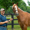 Scott Mallory with Hip 114 colt by Lord Nelson out of Bonita Mia, at Scott Mallory consignment, agent for Spendthrift Farm LLC.<br /> Scenes, people and horses at The July Sale at Fasig-Tipton near Lexington, Ky. on July 10, 2021.
