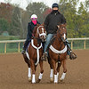 George Weaver ponies Point of Honor<br /> Breeders' Cup horses at Keeneland in Lexington, Ky. on November 1, 2020. Photo: Anne M. Eberhardt
