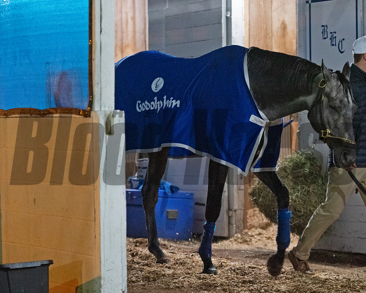 Essential Quality after his work, walking the shedrow<br /> Kentucky Derby and Oaks horses, people and scenes at Churchill Downs in Louisville, Ky., on April 24, 2021.