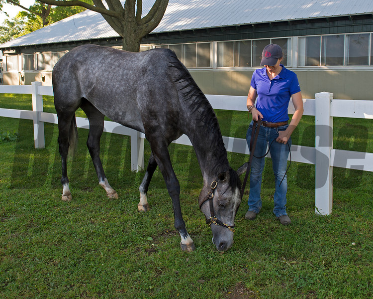 Ascend with Alice Clapham<br /> Tapwrit and other contenders the morning after the Belmont Stakes Presented by NYRA Bets (G1) at Belmont Park  on June 11, 2017 in Elmont, New York.