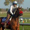 Lady Prancealot<br /> Breeders' Cup horses at Keeneland in Lexington, Ky. on November 5, 2020.