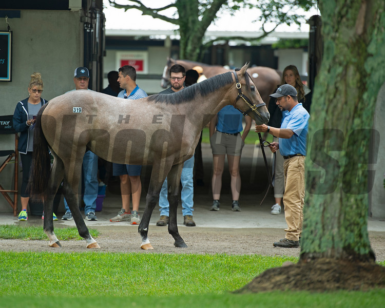 Hip 319 colt by Into Mischief out of UR DVLN Disguise at Wynnstay Sales. Scenes, people and horses at The July Sale at Fasig-Tipton near Lexington, Ky. on July 11, 2021.