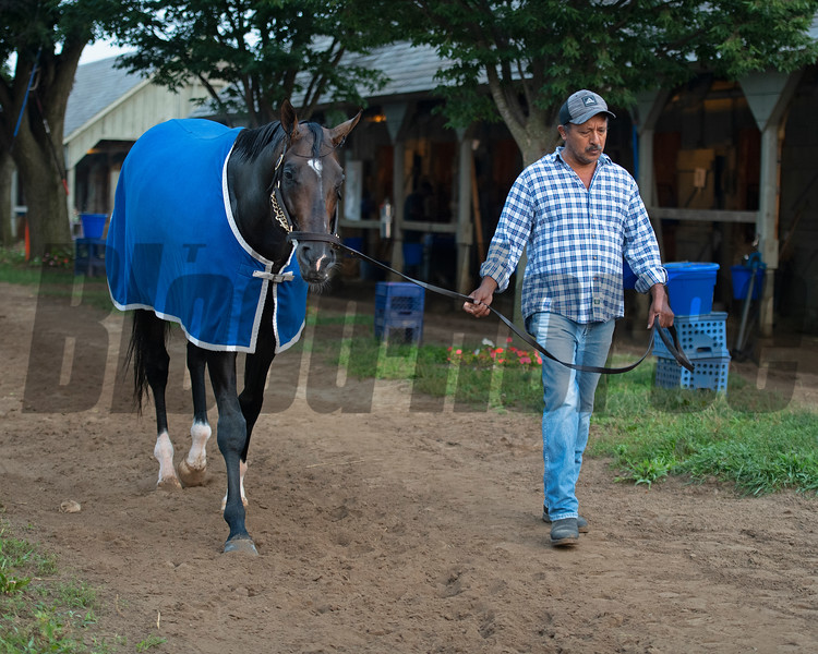Silver State<br /> Saratoga training and sales scenes at Saratoga Oklahoma track and Fasig-Tipton in Saratoga Springs, N.Y. on Aug. 6, 2021.