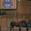 Hip 904 colt by Violence from Ms Arch Stanton and James Herbener Jr. brings $130,000 from Olivia Perkins-Mackey.