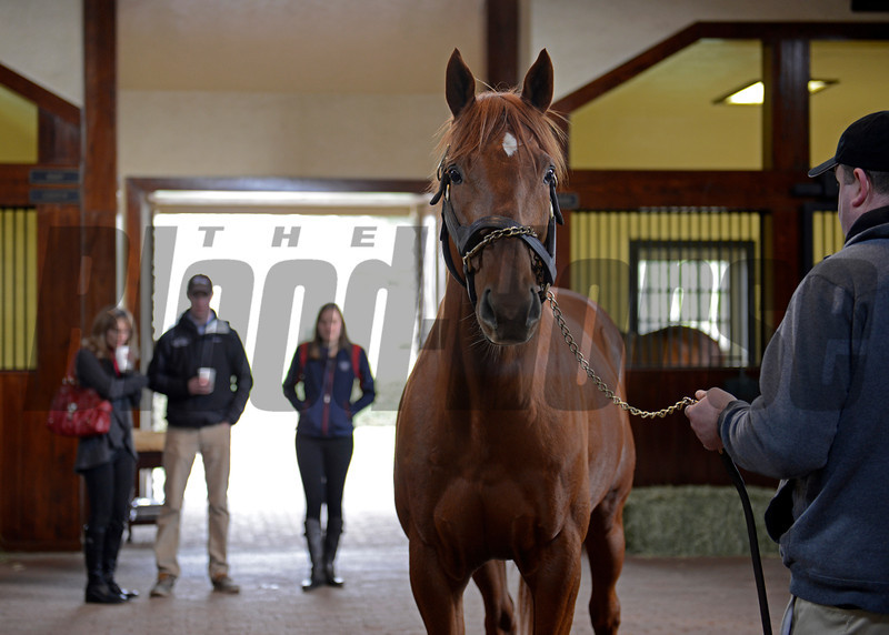 Caption: Icebox at Three Chimneys as clients and fans look on.<br /> Keeneland January sale at Keeneland in Lexington, Ky. on Jan. 7, 2013.<br /> KeeJan2013 Sales MonOrigs1 image932<br /> Photo by Anne M. Eberhardt