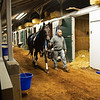 Caption: walking shedrow before training<br /> Midnight Bisou at Keeneland on May 2, 2020 Keeneland in Lexington, KY.