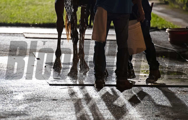 Caption: bathing a horse early morning<br /> Kentucky Derby and Oaks training at Churchill Downs near Louisville, Ky., on Aug. 30, 2020 Churchill Downs in Louisville, KY.