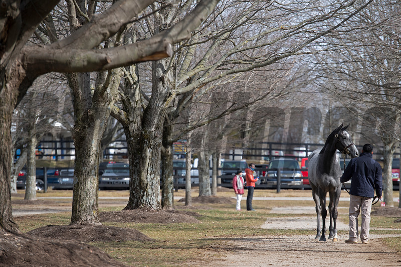 Scene with Hip 324 Bankruptonthebeach from Brookdales Sales at Fasig-Tipton Winter Mixed Sale in Lexington, Ky. on Feb. 6, 2021.