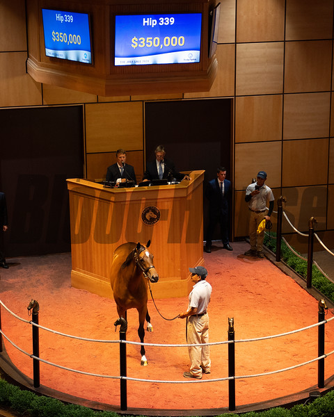 Hip 339 filly by Into Mischief out of Anahauc at Four Star Sales, for Spendthrift<br /> Scenes, people and horses at The July Sale at Fasig-Tipton near Lexington, Ky. on July 13, 2021.