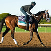 Fire at Will<br /> Breeders' Cup horses at Keeneland in Lexington, Ky. on November 4, 2020.