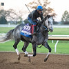 Knicks Go<br /> Breeders' Cup horses at Keeneland in Lexington, Ky. on November 4, 2020.