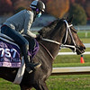 Vequist<br /> Breeders' Cup horses at Keeneland in Lexington, Ky. on November 5, 2020.