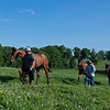 Handwalking. Justify yearling out of Screaming Skylar at Rose Hill Farm in Lexington, Ky., Followed by two Mendelssohn yearling fillies in Lexington, Ky. on June 28, 2021.