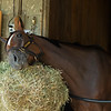 Malathaat, When you have a scratch and still look cute.<br /> Saratoga racing scenes in Saratoga Springs, N.Y. on Aug. 5, 2021.