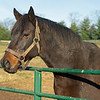 Silver Max<br /> Old Friends near Georgetown, Ky., on Dec. 11, 2020.