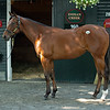 Hip 160 filly by Quality Road out of Above Perfection at Indian Creek, agent<br /> Saratoga training and sales scenes at Saratoga Oklahoma track and Fasig-Tipton in Saratoga Springs, N.Y. on Aug. 6, 2021.