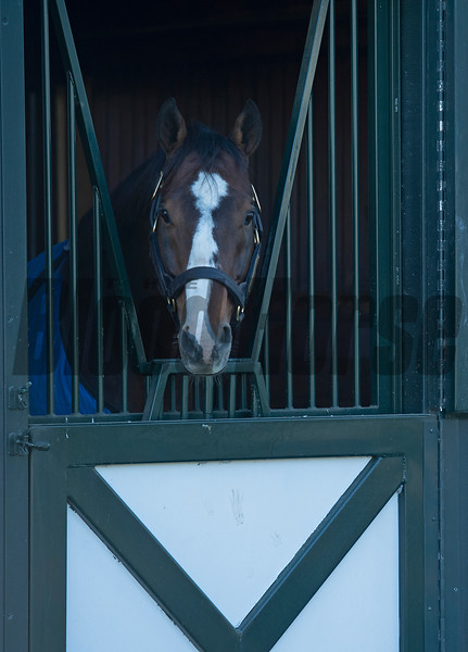 Into Mischief<br /> Eclipse Award scenes at Spendthrift Farm near Lexington, Ky., on Dec. 22, 2020.