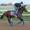 Mucho Unusual<br /> Breeders' Cup horses at Keeneland in Lexington, Ky. on November 5, 2020.