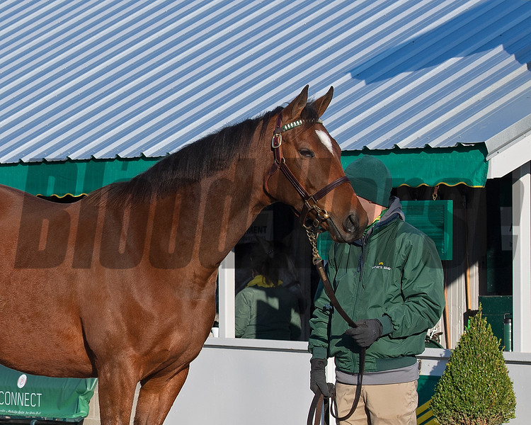 HIp 793 Proper Mad from the complete dispersal of Paul Pompa at Lane's End<br /> Keeneland January Sales at Keeneland near Lexington, Ky., on Jan. 10, 2021.