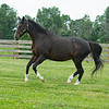 Caption: prancing in her paddock<br /> Hollywood Story at Starwood Farm near Versailles, Ky., on June 30, 2020 Starwood Farm in Versailles, KY.