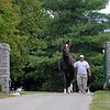 Caption:<br /> Tiznow at WinStar Farm near Versailles, Ky. on Sept. 16, 2008, in Lexington, Ky. <br /> Tiznow image9514<br /> Photo by Anne M. Eberhardt